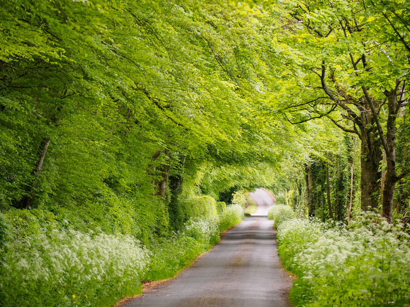The Westmeath Way follows this lane between Lough Ennell and the Royal Canal