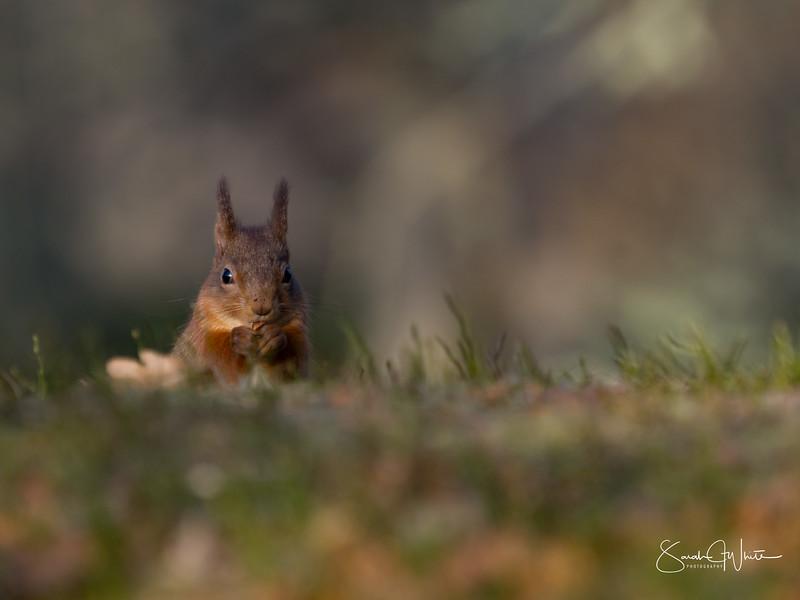 RedSquirrelBootCamp_130217_057.jpg