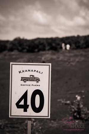 MauiGrown Coffee's Kā'anapali Estate Coffee Farm. (One lot at the farm, anyway.) © 2013 Sugar + Shake