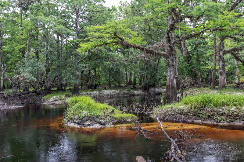 Econlockhatchee River bend