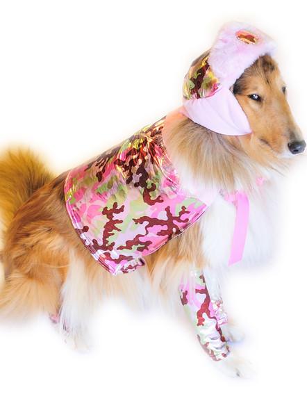 Costumed Dog Photos - Jesse Ascher 081_1.jpg