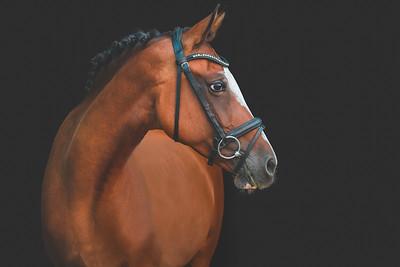 Equine Portrait Gallery
