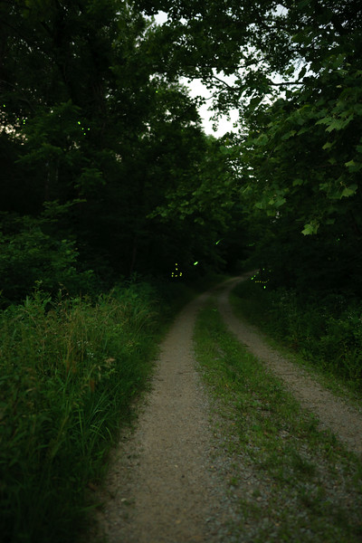 I took these photos as a guest of a Bernheim Forest Night Naturalist while studying firefly activity in Bernheim