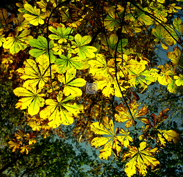 Things To Do in the Queen's Park, no.18 - See the colours of autumn