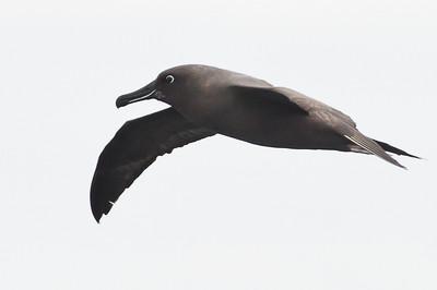2013 September 01 Eaglehawk Neck pelagic