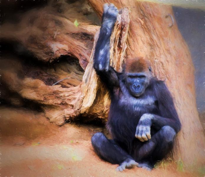 Gorilla Holding stump_Topaz LaSalle 1.jpg
