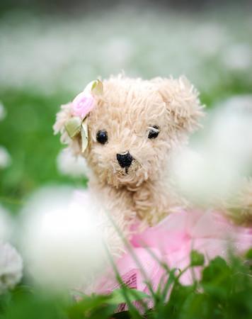 ~ Bella Bear ~