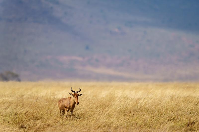 NgorongoroCrater-20181004-1693.jpg