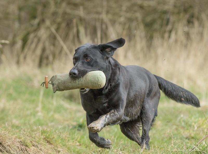 Dogs-5286.jpg