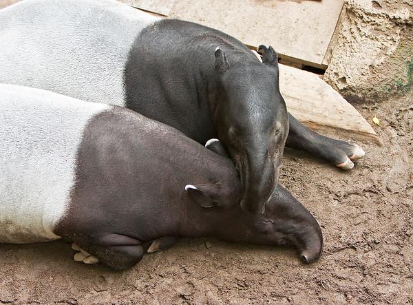 Omaha Zoo 2007