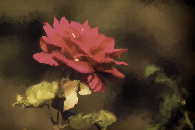 November 18 - Rose and leaves in dream state.jpg