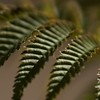 Of Frond or Foe