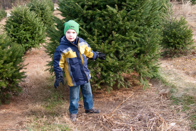 K.C. finds the perfect tree.