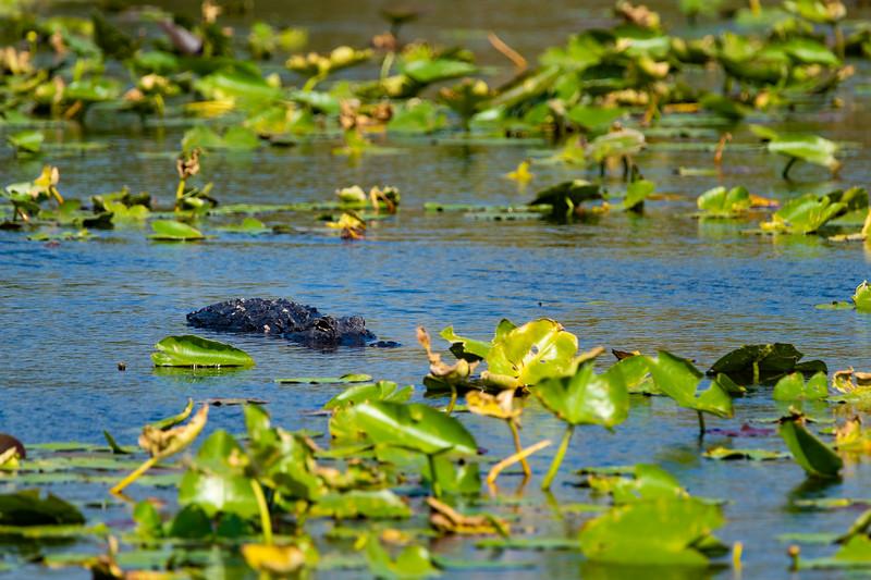 Everglades (27 of 37).jpg