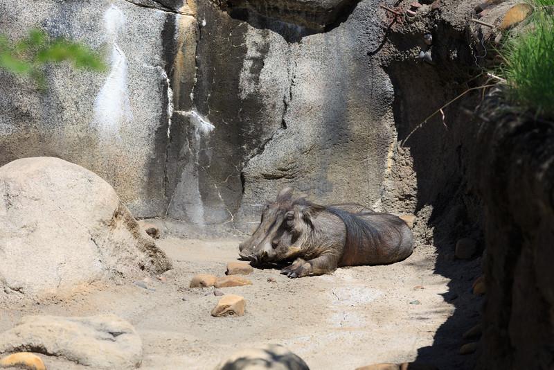 2015_08_20 Kansas City Zoo 008.jpg
