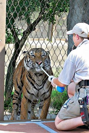 Houston Zoo 8-20-2006
