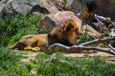 Denver Zoo - 2011