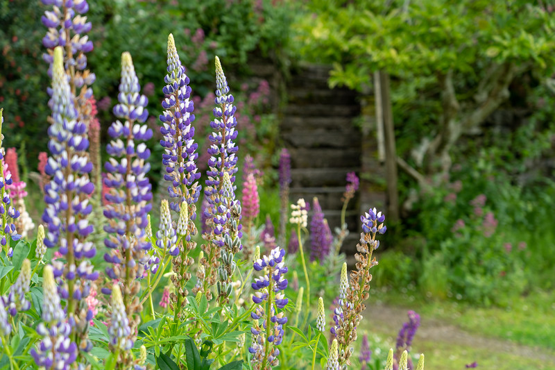 Islay House Community Garden