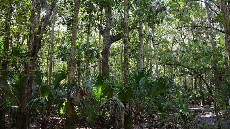 Dense subtropical forest
