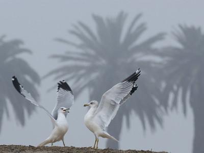 Best of Birds