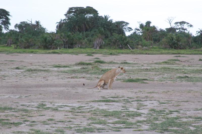 Kenya 2019 #2 1365.JPG