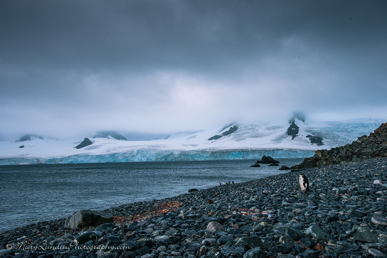 Antarctic-63