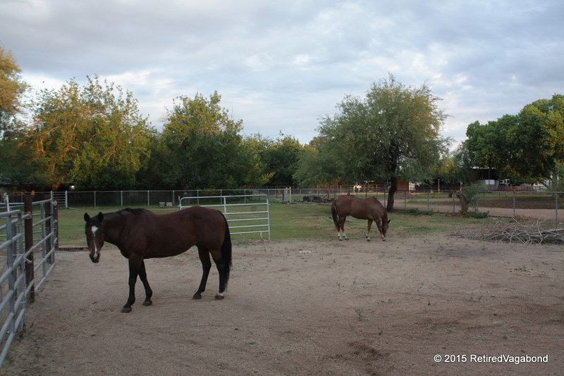 Captured at Camp Mesa Arizona (neighbors horses)