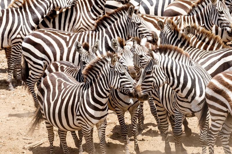Kenya 2015-04730.jpg