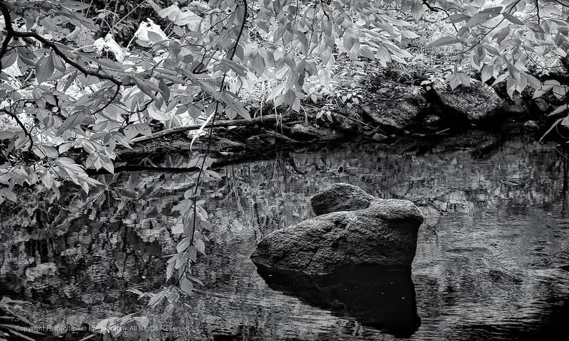 Mianus River 012