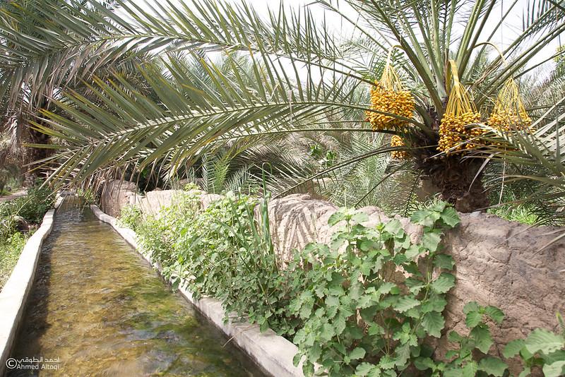 Aldhahir - Bidyah.jpg