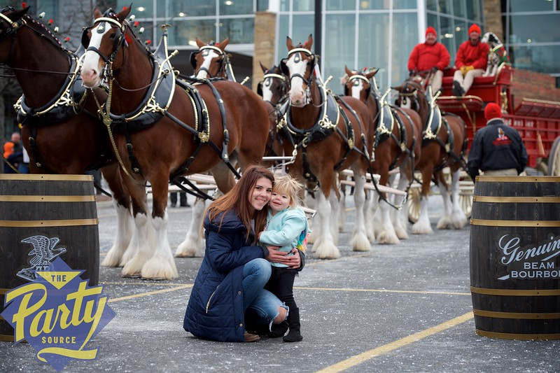 Clydesdale Portraits 42.jpg