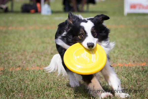 _MG_3060Up_dog_International_2016_StephaniellenPhotography.jpg