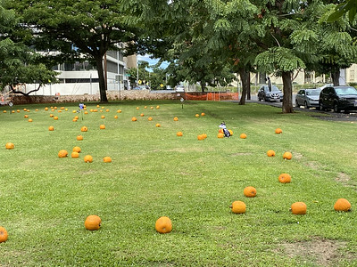 LS Pumpkin Patch in the Park