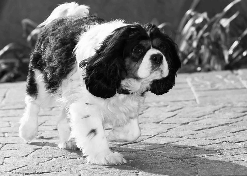 Clifton_Dogs_0066.jpg