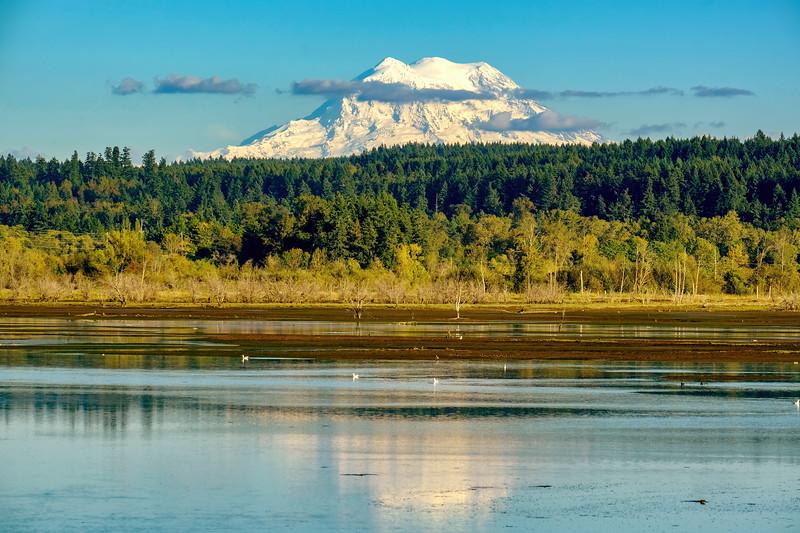 Nisqually Wildlife Refuge in Washington