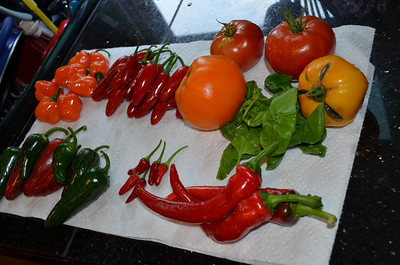 Garden Harvest - Sept/Oct 2013