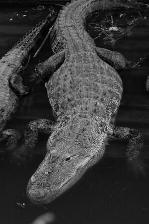 Gator Land 6/3/08