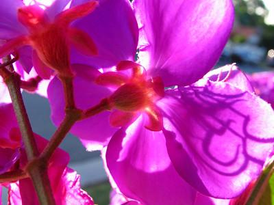 Pro1 Super Macro Flowers