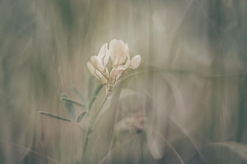 Soft Flowers IV
