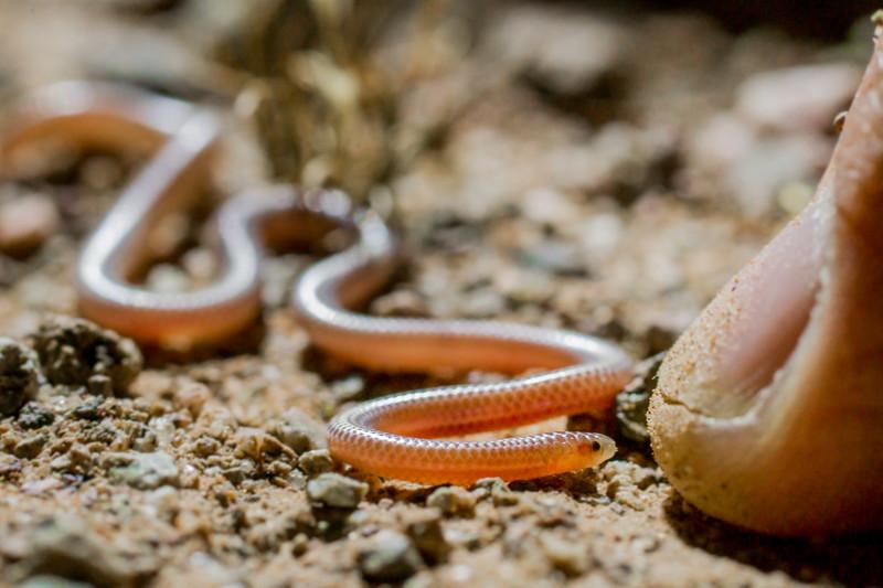 Biodiversity Group, _DSC6607