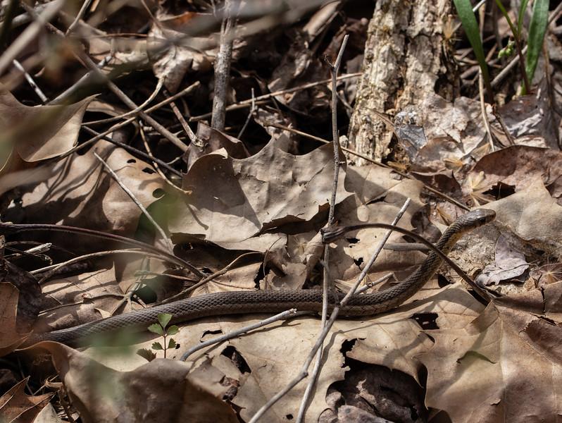 snake 041319-4.jpg