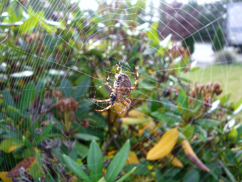 Spider in action.