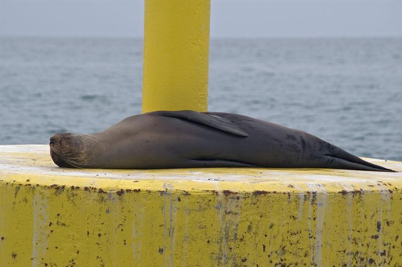Sea lion sleeping on buoy   (Dec 10, 2005, 02:20pm)
