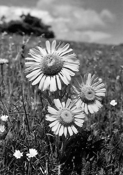 amh FLOWERS (1097).jpg