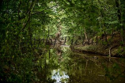 Banita Creek  (15)