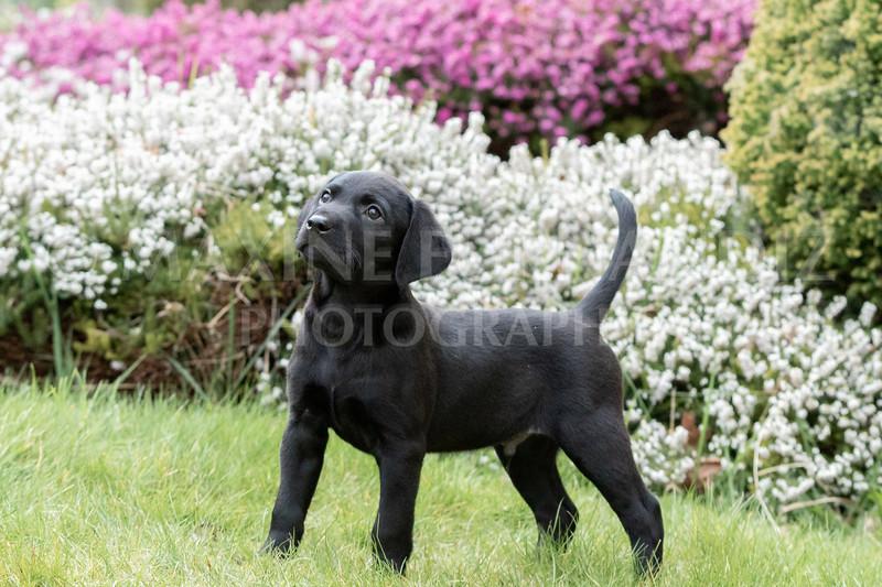 Weika Puppies 24 March 2019-6477.jpg