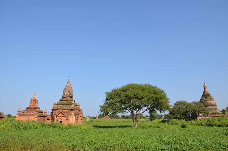 DSC_3917-field-of-small-temples.JPG