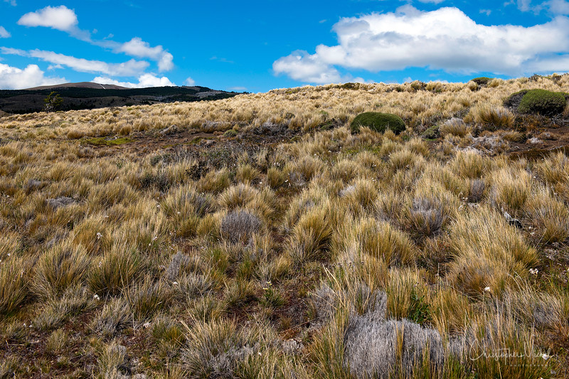091213_torres_del_paine2_5362a.JPG