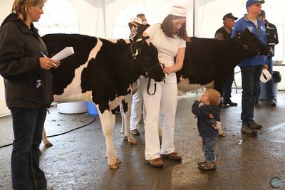 AB Dairy Congress Holstein 2017