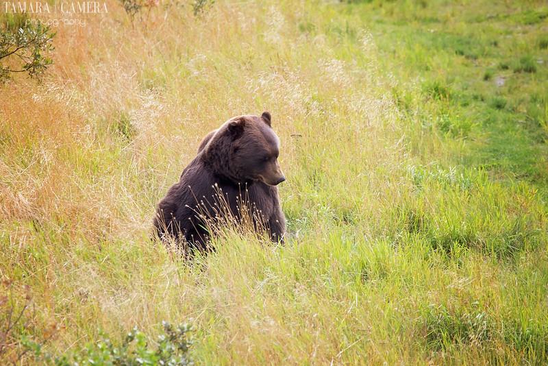 Bear-4-2.jpg
